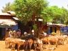 Addis2Somaliland09