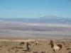 Atacama wildlife.